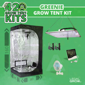 Home 5 Hydroponic grow equipment for sale in South Africa. LGZA 420 Growtent Kit Greenie2